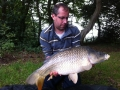 20lb Balcombe common