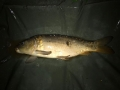 S Court Vailbridge Carp 2