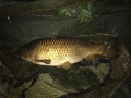 S Court Vailbridge Carp 3
