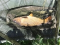S Court Vailbridge Carp 4